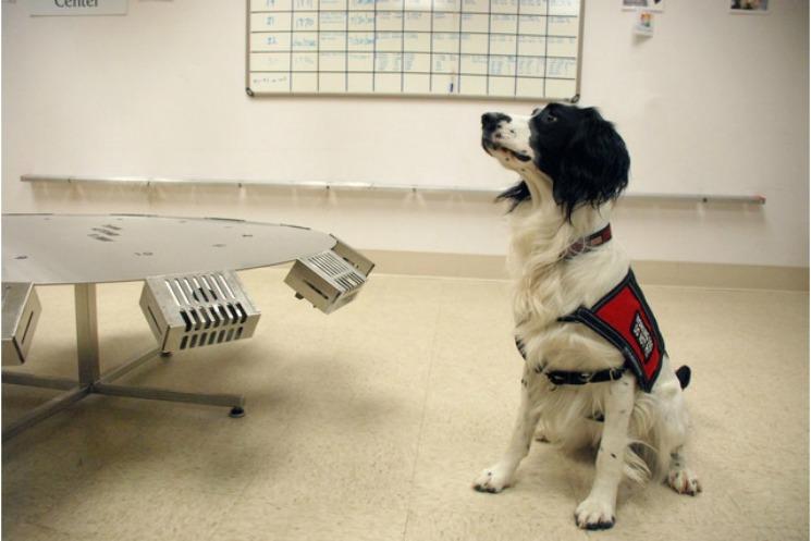 Kanseri Koklayan Köpekler
